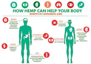 infografica dei benefici olio di cannabis