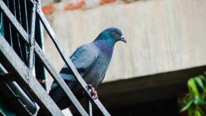 Come installare i dissuasori per i piccioni